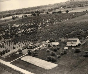 Stiffler Orchards as seen from the air-1960s.